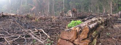 Vypalování lesa v Amazonii Foto: guentermanaus Shutterstock