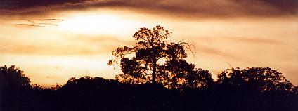 mazonský prales v oblasti řeky Negro Foto: Diogo Melo Flickr.com