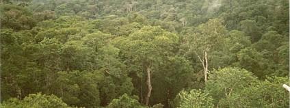 Amazonský prales Foto: Phil P Harris Wikimedia Commons
