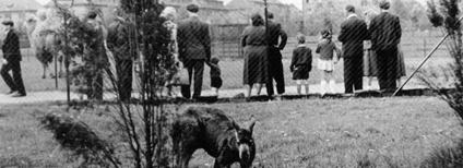 Areál zoo v Kunčičkách z roku 1954 Foto: archiv Zoo Ostrava