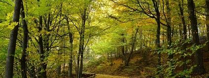 Opadavé stromy Foto: congerdesign pixabay
