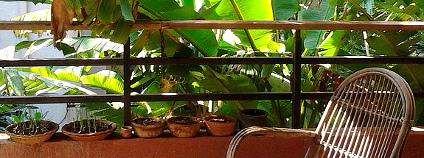 Zelený balkon Foto: Siidhartha Sikdar / Flickr.com