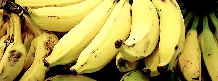 Banány Foto: Fernando Stankuns / Flickr
