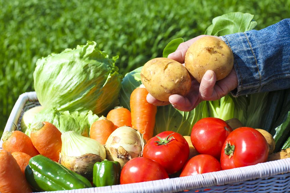 Iva  Nevečeřalová: Komunitou podporovaného zemědělství zažívá v době koronavirové boom