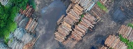 Kácení deštných pralesů středoafrické konžské pánve v Africe.
