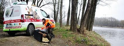 Foto: Záchranná stanice hl. m. Prahy pro volně žijící živočichy