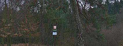 Památný strom - borovice u Pekla u Suchdolu Foto: Jiří Komárek, JiriKomarek.net Wikimedia Commons