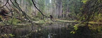 Foto: Lesy ČR