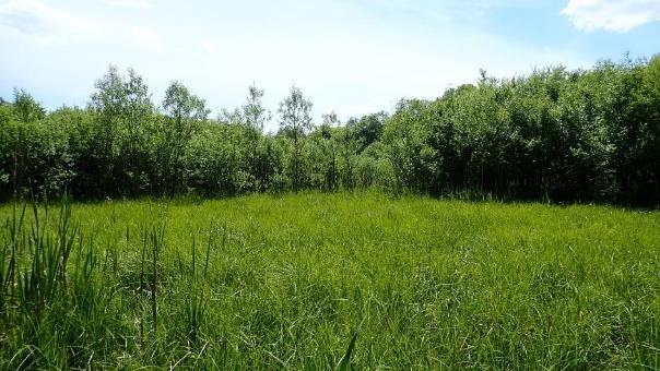 """Obr. 1: Nevyužívaný rybník s protékající hrází na hranici CHKO Blanský les. Hloubka vody je zde okolo půl metru a tento """"rybník"""" plynule přechází v podmáčené vrby. Celý rybník je hustě zarostlý vegetací a krom několika druhů brouků, ploštic a vážek zde byli zaznamenáni i čolci velcí a obecní či užovka obojková. Zničíme takovýto biotop kvůli """"lepšímu"""" zadržení vody v krajině?"""