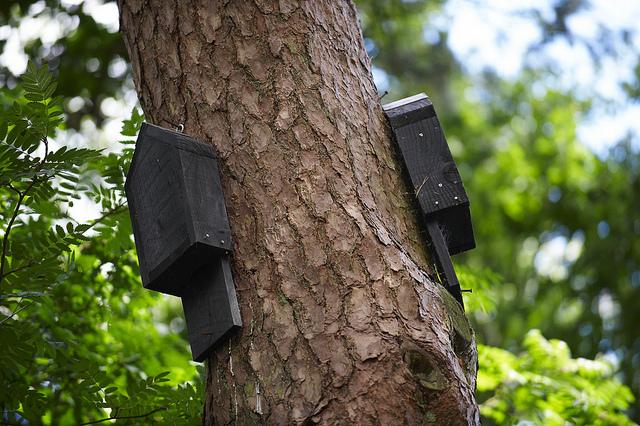 Netopýří budky na stromě