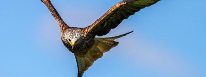 Letící dravec Foto: pxhere