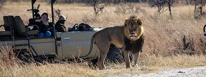 Lev Cecil Foto: Vince O'Sullivan Flickr