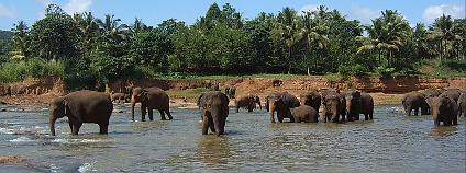 Skupina slonů nedaleko slonního sirotčince v Pinnawale, Srí Lanka: Foto: Petr Kosina / Flickr