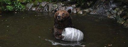 Medvěd na zámku v Českém Krumlově Foto: Ben Skála / Wikimedia Commons