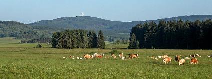 Krajina �esk�ho lesa pod vrchem Zvon Foto: David Paloch / Wikimedia Commons