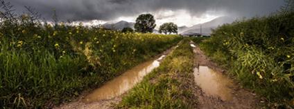 Cesta s kalužemi Foto: pxhere