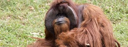 foto: Zoo Atlanta