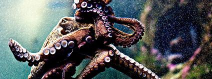 Chobotnice Foto: Noel Feans / Flickr