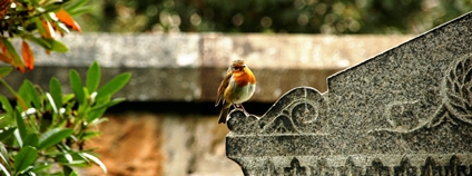 Červenka na hrobním kameni Foto: Chris Arthur-Collins Unsplash