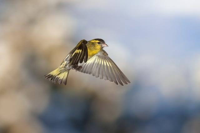 Obrázky 9 palců ptáků