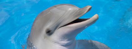 Delfín Foto: Pannochka / Shutterstock