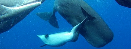 Foto: Alexander D. M. Wilson / Aquatic Mammals