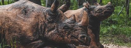 Dřevění nosorožci Foto: Safaripark.cz