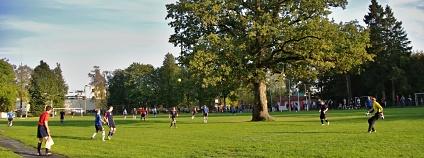 Foto: Elina Kalm Evropsk� strom roku
