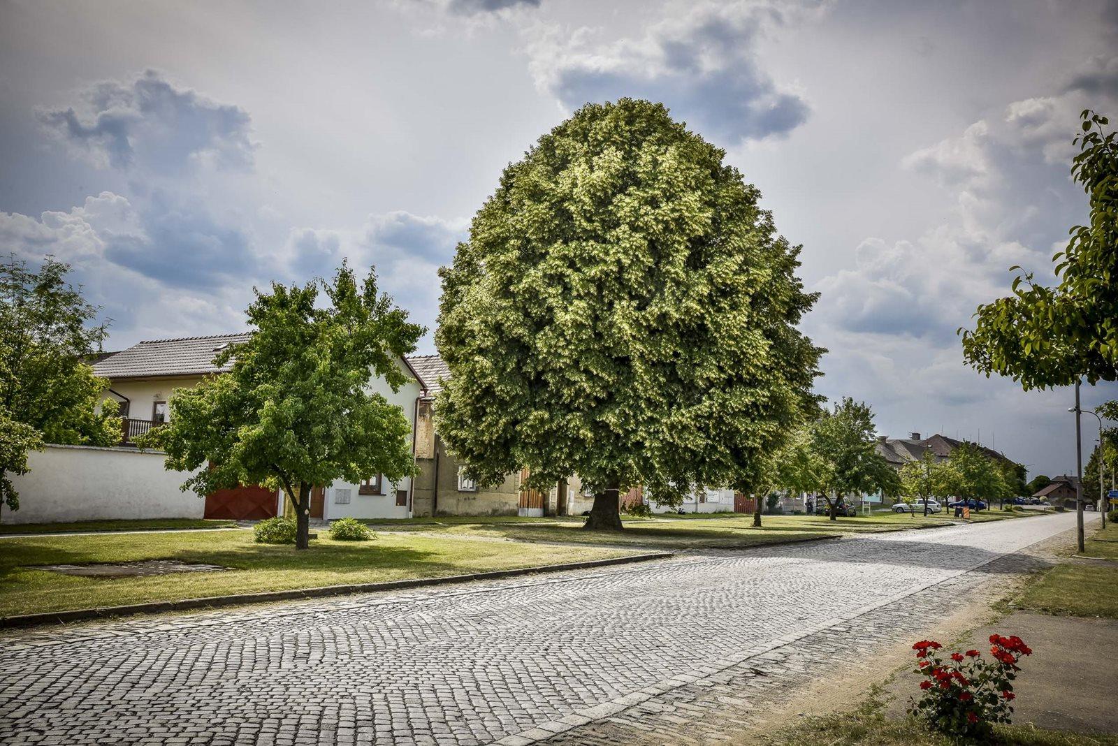 Česko hledá podvacáté Strom roku
