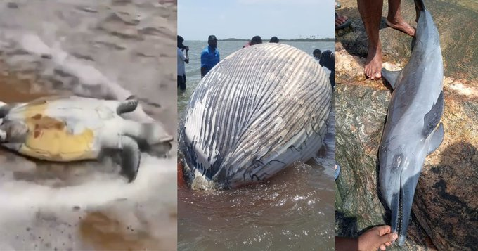 Po požáru lodi byli na pobřeží Srí Lanky vyplaveni mrtví delfíni i stovka želv