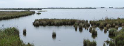Delta řeky Ebro Foto: vali.lung / Shutterstock.com