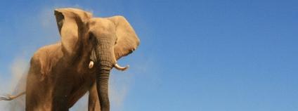 Slon v severozápadní Namibii Foto: Vernon Swanepoel Flickr.com