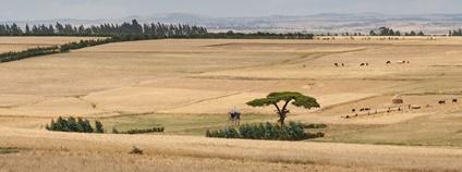 Kulturní krajina v Etiopii Foto: Gregoire Dubois Flickr.com