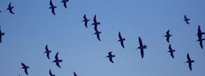 Letící ptáci Foto: Mila Zinkova home.comcast.net