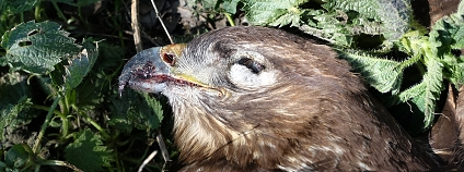 Foto: Klára Hlubocká / Česká společnost ornitologická
