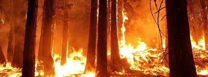 Lesní požár Foto: skeeze pixabay.com