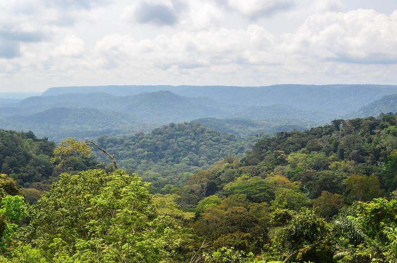 Gabon dostal jako první v Africe zaplaceno za ochranu deštného pralesa
