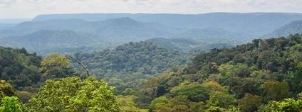 Prales v Gabonu Foto: jbdodane Flickr