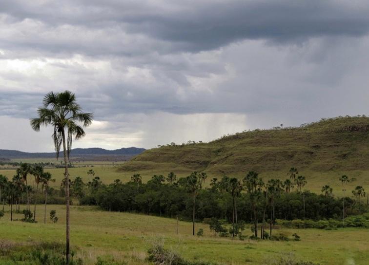 Cerrado. Jihoamerická savana, která se od té africké liší nejen složením vegetace, ale také vyšší vlhkostí.