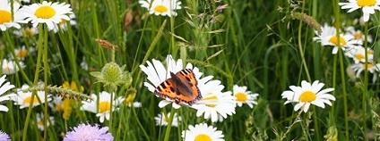 Motýlí louka Foto:krnov.cz