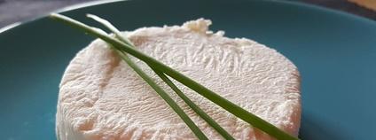 Kozí sýr Foto: Piqsels