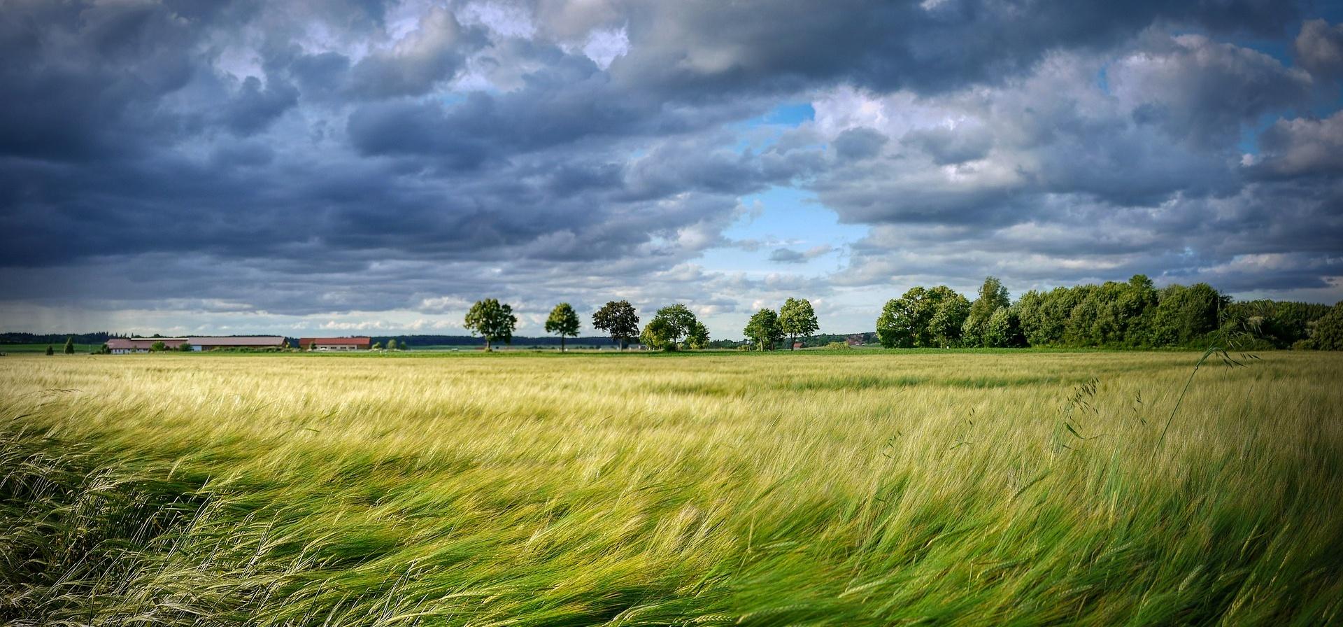 Ladislav Miko: První dojmy z nové evropské zemědělské politiky? Zásadní změna se nekoná
