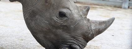 foto: safaripark.cz