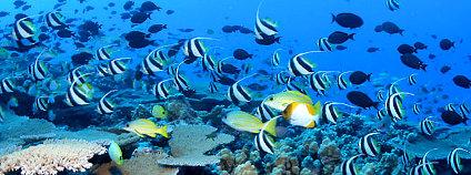 Korálový útes v severozápadní části Havajských ostrovů Foto: NOAA's National Ocean Service / Flickr.com