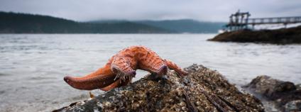 Mořská hvězdice Foto: Eugene Kalenkovich Shutterstock