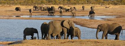 Sloní stádo v přírodní rezervaci Hwange v Zimbabwe Foto: Michael Sprague Flickr.com