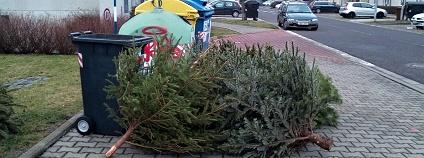 Vyhozené vánoční stromky Foto: Martin Mach Ondřej Ekolist.cz