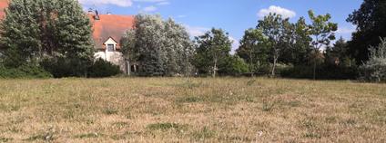 Suchý trávník v létě Foto: Zdeňka Kováříková