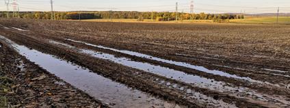 Přejezd těžké zemědělské techniky zhutní půdu natolik, že se nevsakuje celé dny po dešti. Přeštice, podzim 2020.