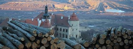Greenpeace žádá ČIŽP, Ústecký kraj a MŽP, aby zastavily devastaci vzácných bukových lesů u Horního Jiřetína